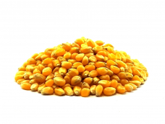 Ziarno kukurydzy (popcorn) BIO